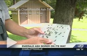 Emerald Ash Borer video